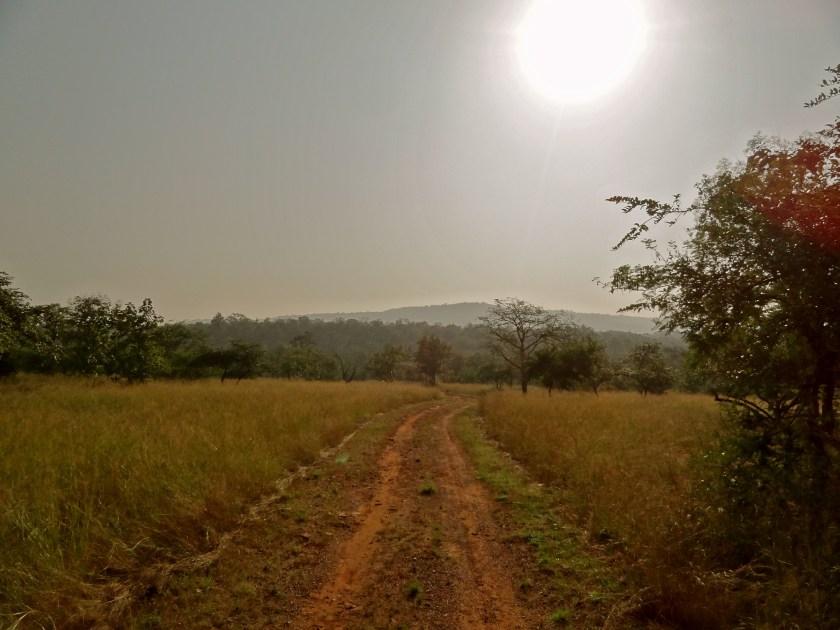 Panna national park, Panna madhya pradesh