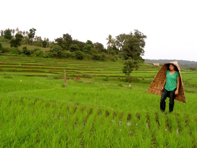 Coorg organic farm, Coorg homestay, Coorg rice paddies