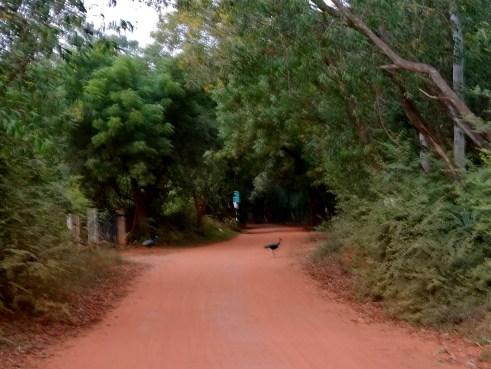 Auroville photos, Auroville Pondicherry, Auroville blog