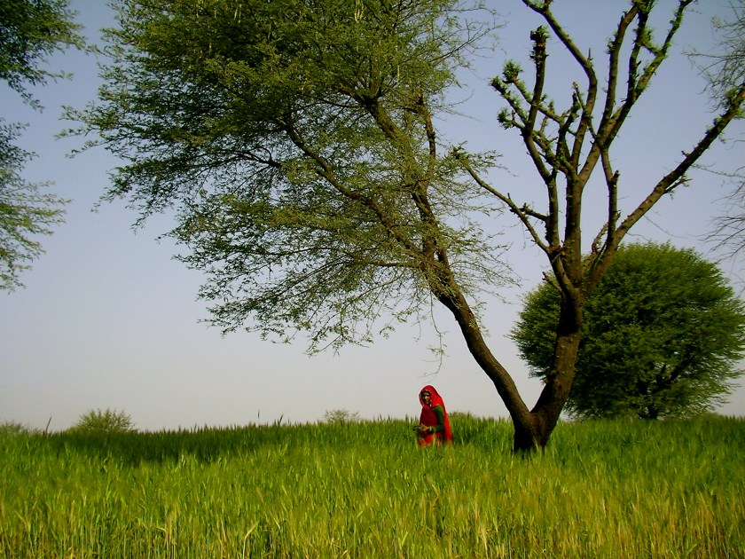 Nirvana Organic Farm, organic farm stays India, villages near Jaipur, offbeat places in rajasthan