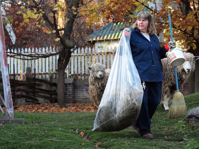 Riverdale Farm Toronto, free things to do in Toronto, Toronto offbeat