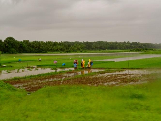 Goa in monsoon, Goa rains