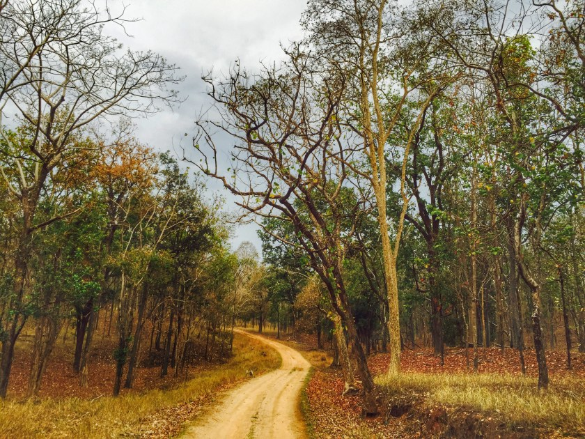 Pench national park, Pench madhya pradesh, Pench tiger reserve, Pench jungle safari