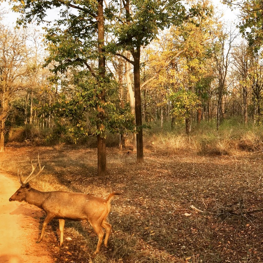 Pench national park, Pench tiger reserve