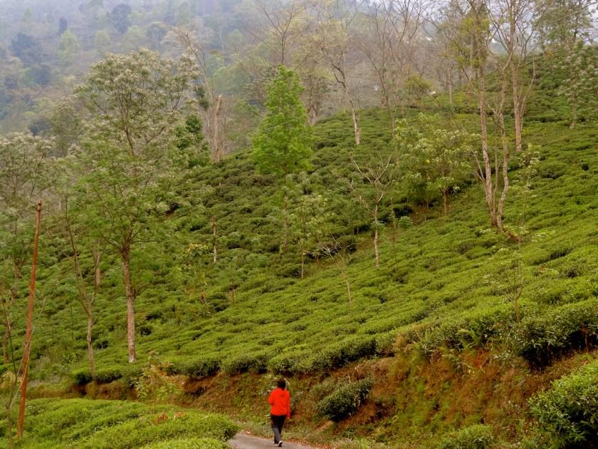 solo travel india, solo travel blogs