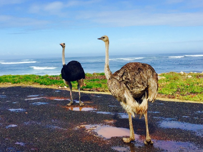 south africa natural beauty, south africa travel blog