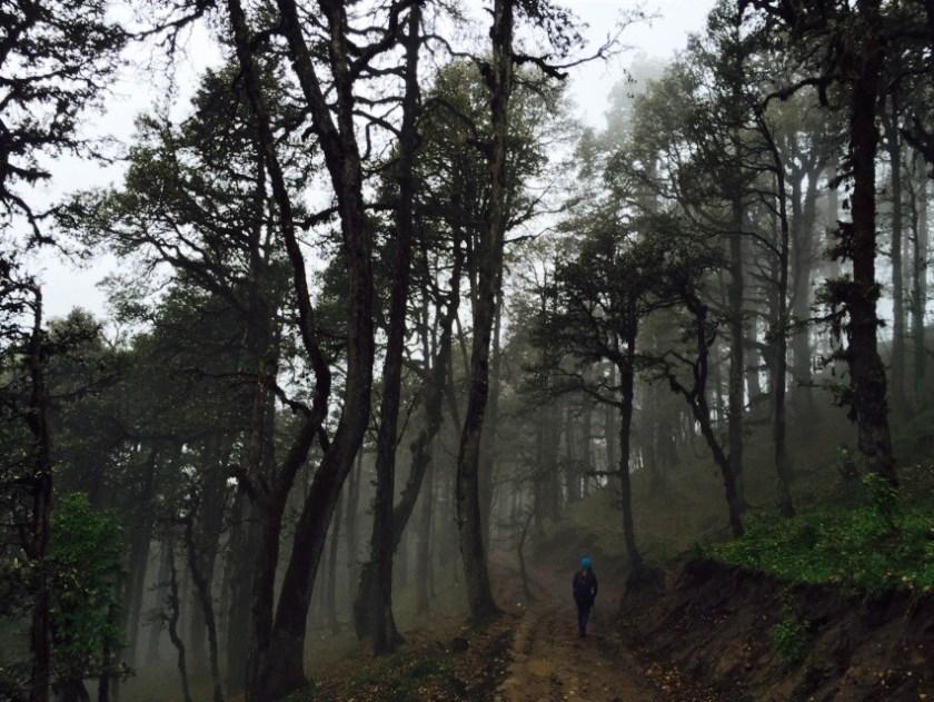 Himachal Pradesh forests