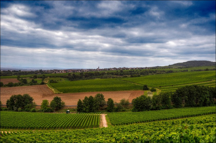 German wines, Germany wine regions, Rheingau, #notjustbeer