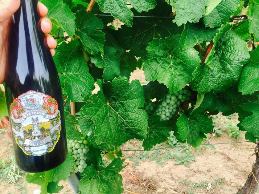 Queen victoria vineyard, hochheim germany, flick family rheingau