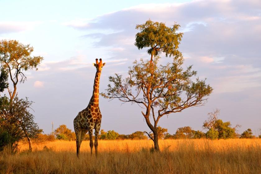 South Africa wildlife, South Africa photos