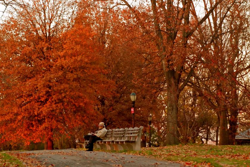 fall colors new york, fall nyc, nyc travel blog