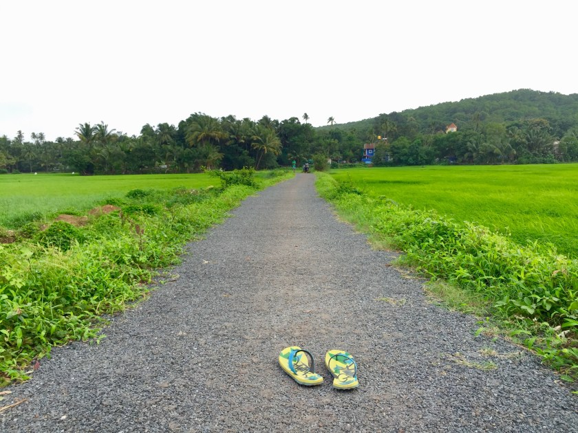 saligao rice paddies, saligao monsoon