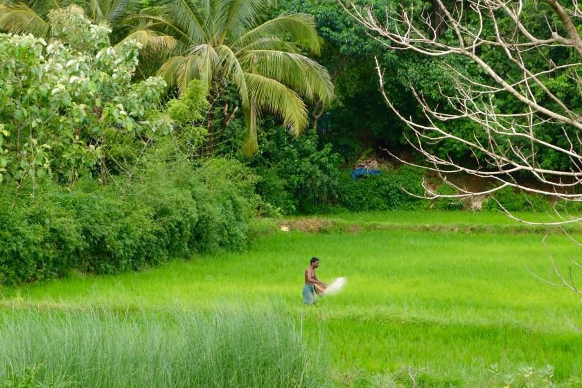 Kerala monsoon, Kerala offbeat, nila river, river nila kerala