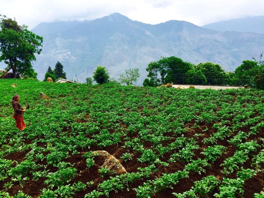 farming life india, himalayan people, Sarmoli uttarakhand