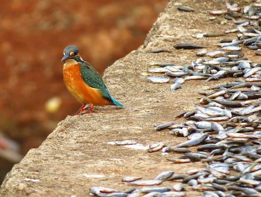 mangalajodi, wildlife conservation efforts in India, wildlife sanctuaries in Odisha