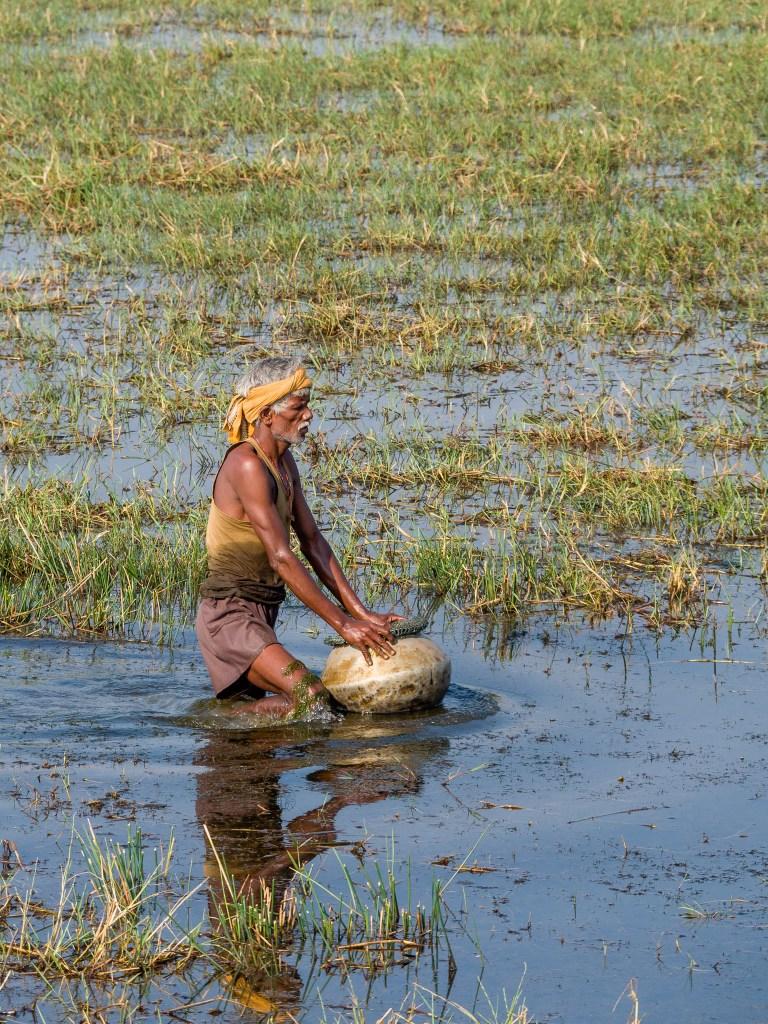 Mangalajodi bird conservation, Orissa travel blog, Orissa places to visit