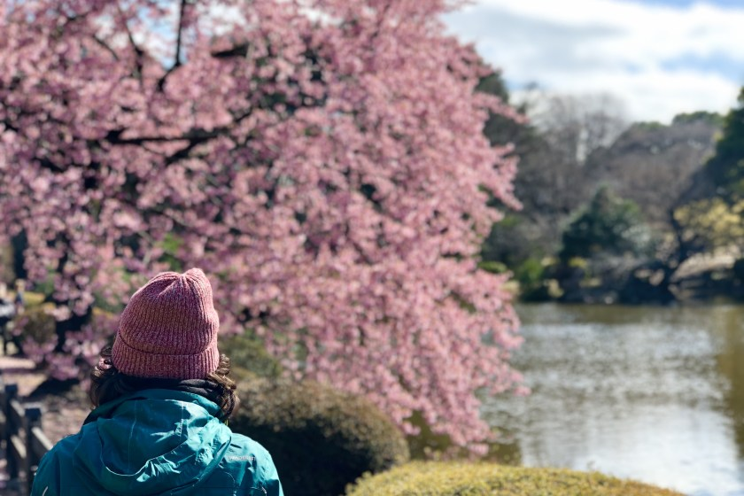 Japan cherry blossom, japan visa for indian, japan visa requirements for Indian citizens