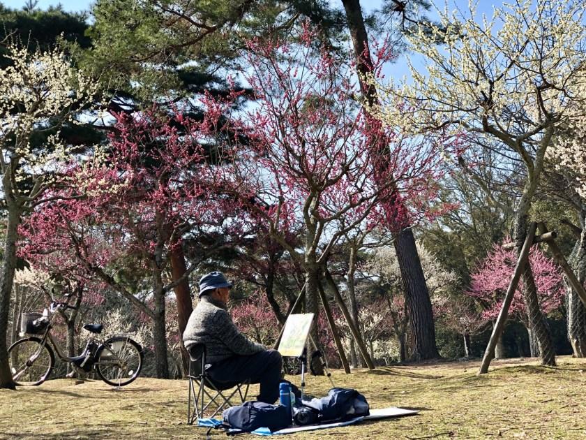 Japan ume, Japan plum blossoms, why visit Japan