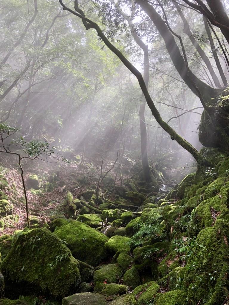 Yakushima island, Japan travel guide, why visit Japan