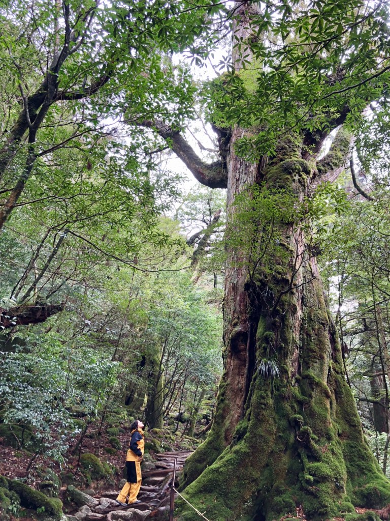 Japan cedar forest, Yakushima island, places to visit in Japan