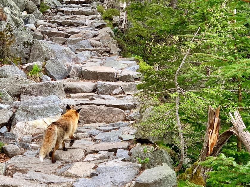 tatra mountain hiking, high tatras slovakia, slovakia travel guide, slovakia travel blog