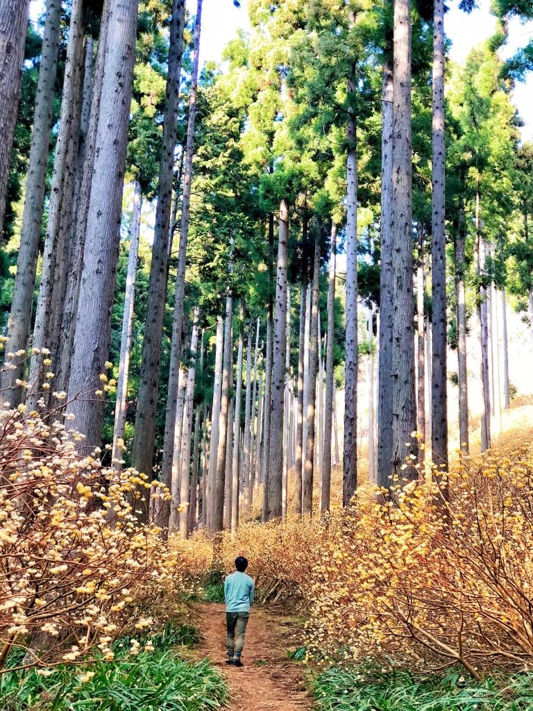 kambayashi