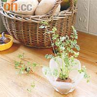 圖中的植物其實是從一個蘿蔔頭生長出來,意想不到吧?