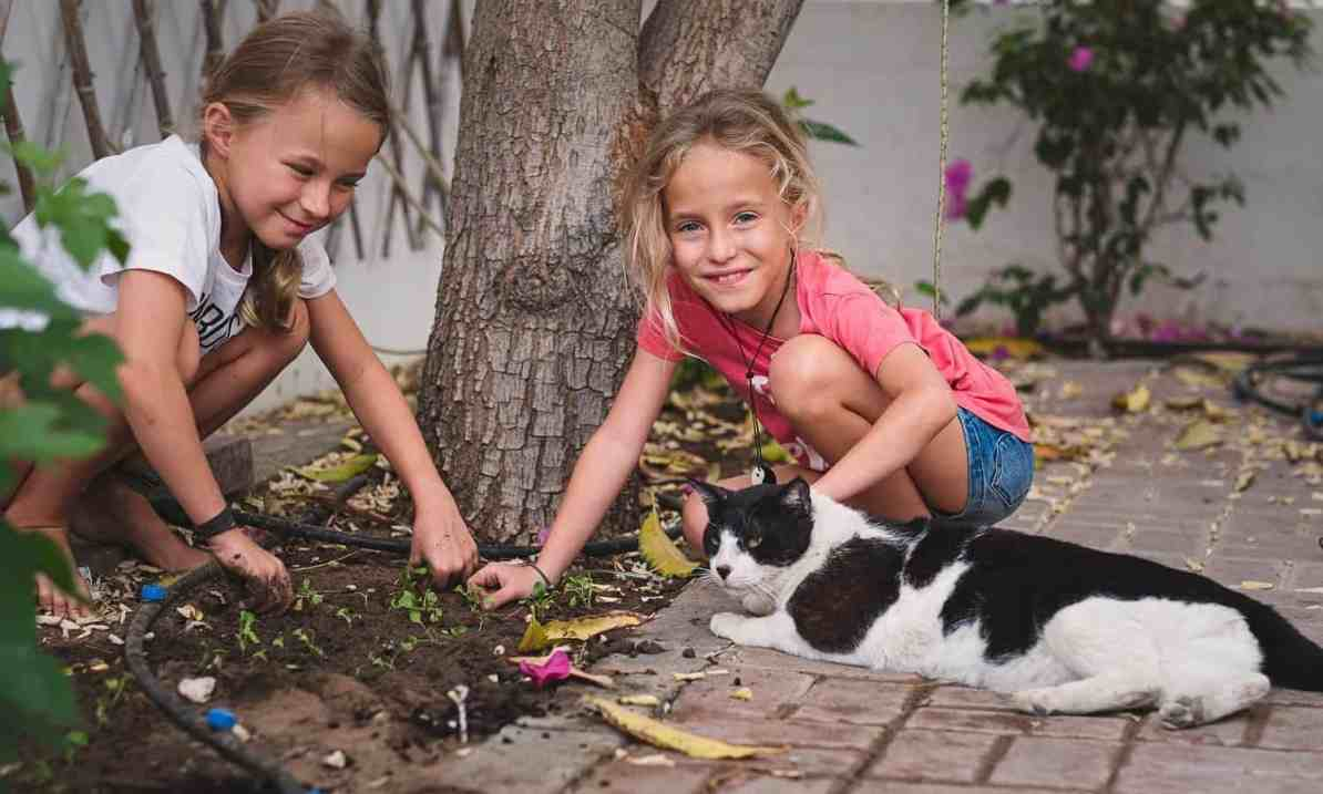 homeschooling - planting rucola