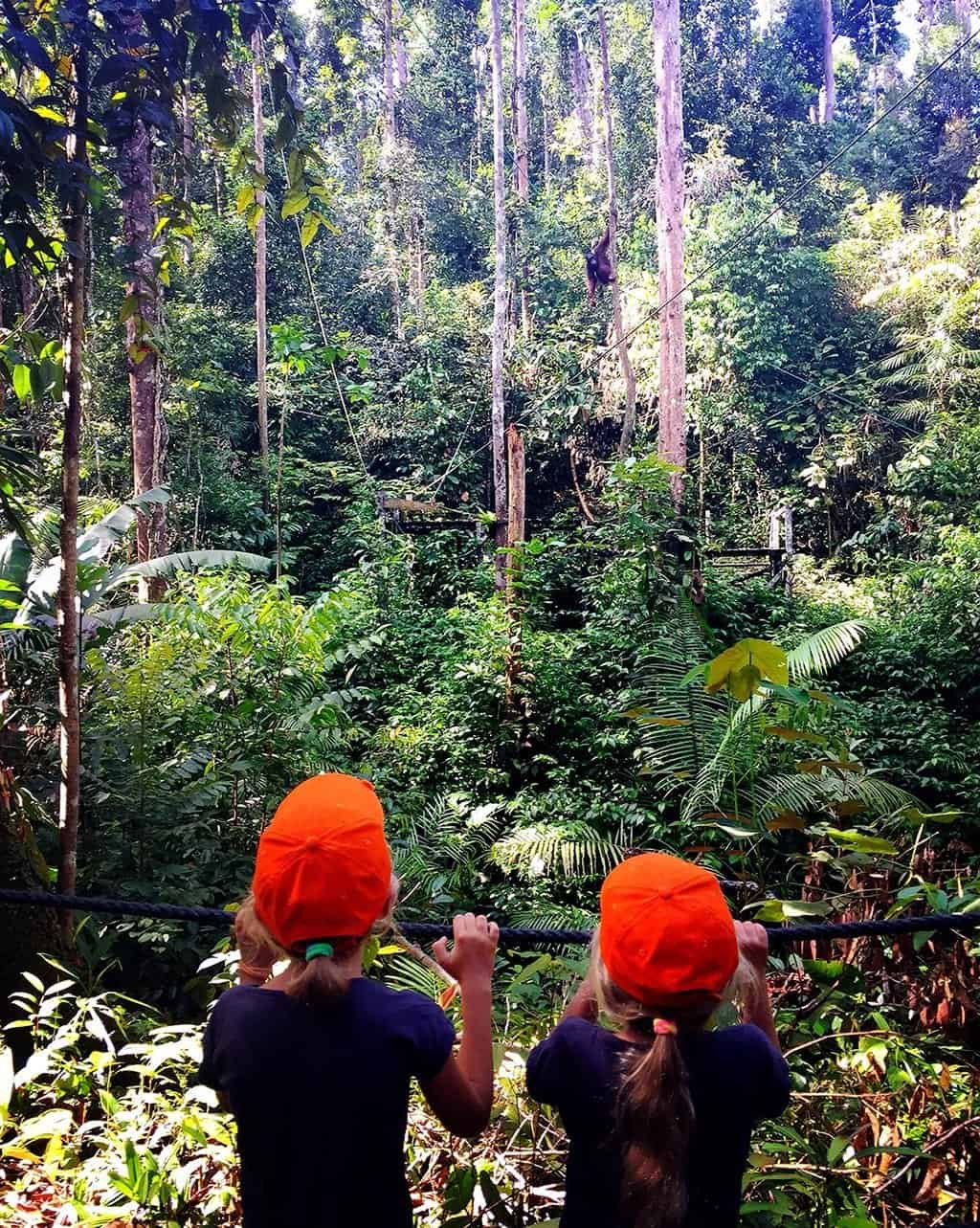 things to do in kuching with kids