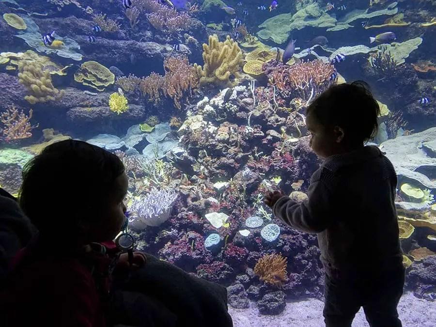 aquariums in the world, best, aqua, aquariums in the world best