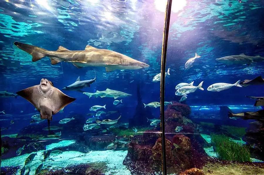 Best Aquarium in the world, world aquarium in the world, best aquariums world's largest million gallons largest aquarium whale sharks