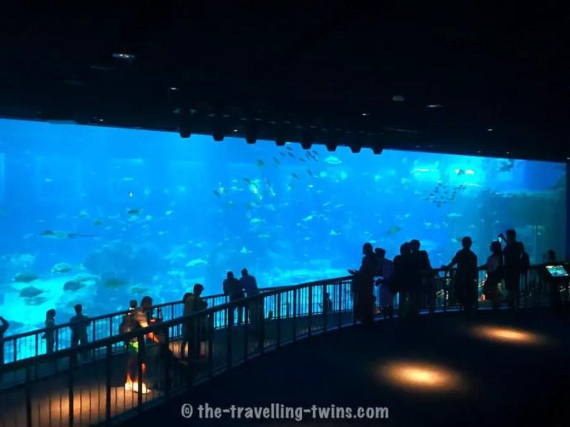 Best Aquariums in the World
