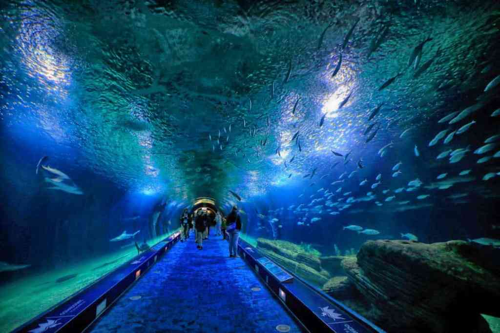 Aquarium tunel with fishes - valencia spain