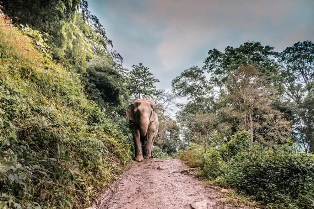 chiang mai visit elephants