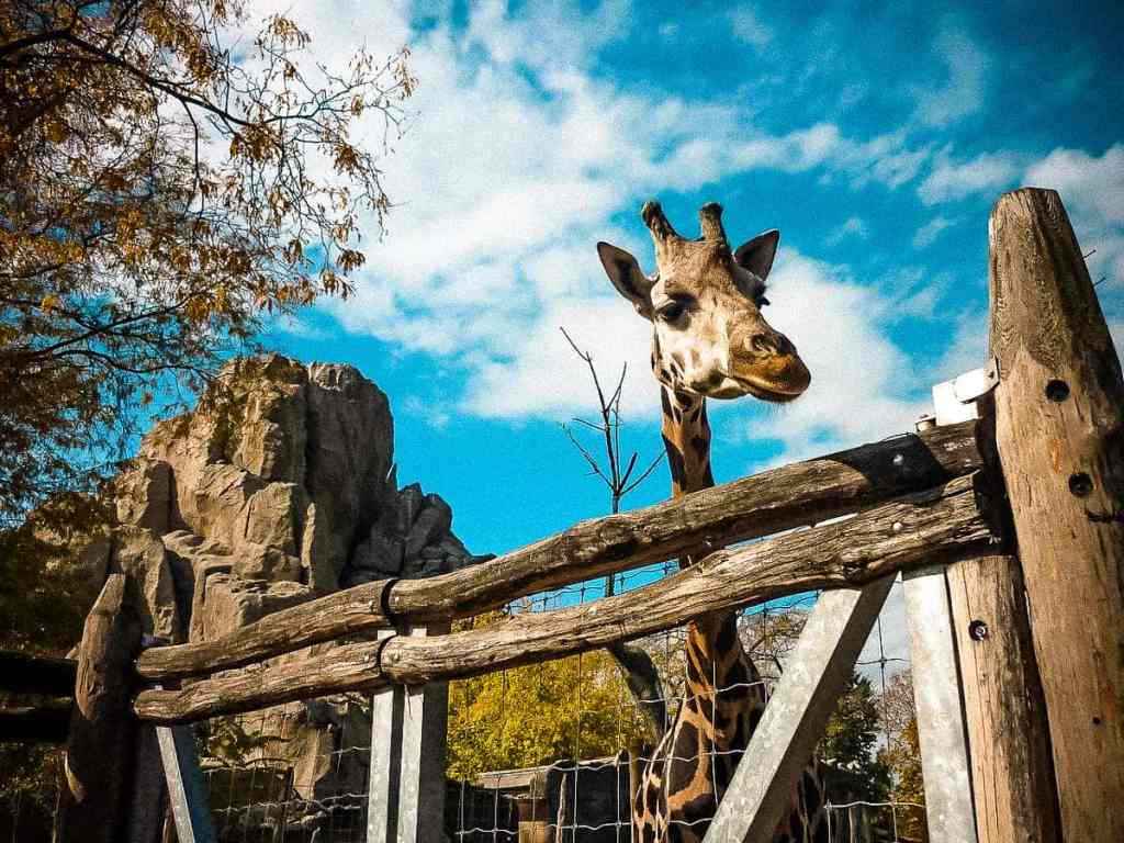 budapest zoo - best things to do in budapest with kids