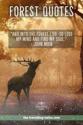motivational quotes about forests
