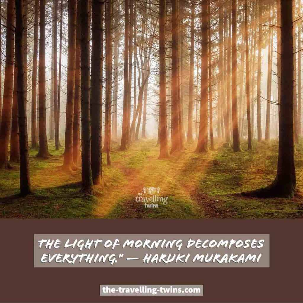 quotes about morning lights in the forest