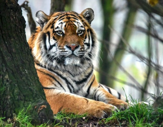 Yorkshire Wildlife Park To Double Its Park After Huge £15m Investment