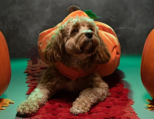 You Can Now Get Halloween Costumes For Your Dog From Just £1.50