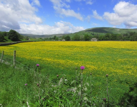 The Idyllic Yorkshire Dales Village That's Famous For Its Wildflower Meadows