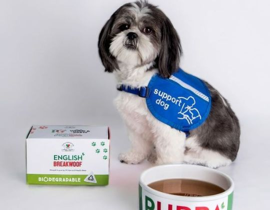 PG Tips Has launched A New Limited-Edition 'English Breakwoof' Your Dog Can Enjoy