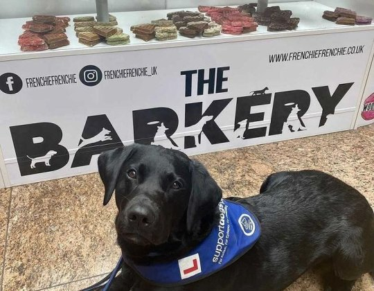 A Bakery Packed Full Of Treats Especially For Dogs Has Opened In South Yorkshire