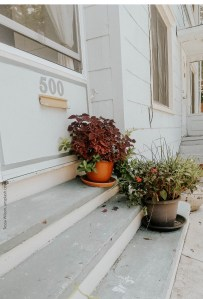 close up of white house, white clapboards, with 3 gray concrete steps leading up to front door, with 2 potted plants on the steps