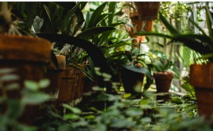 close up of dozens of potted plants, deep green, foreground out of focus, background sharp with light