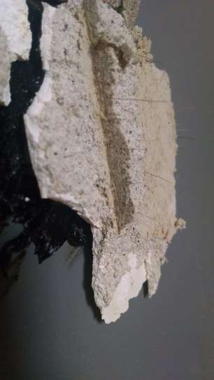 The horse hair found in old plaster.