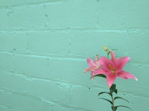 Paint done and, oh look!, a pretty lily.