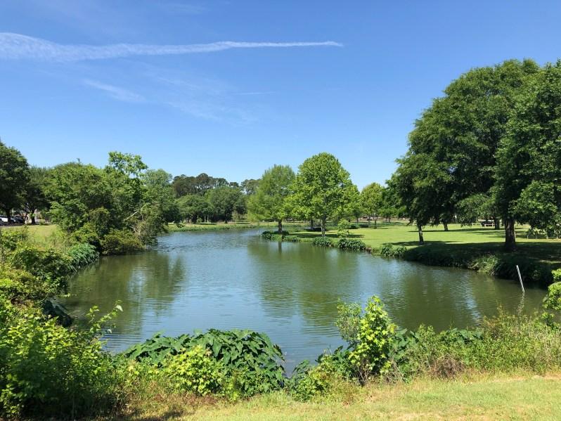 Lake Mayer Savannah
