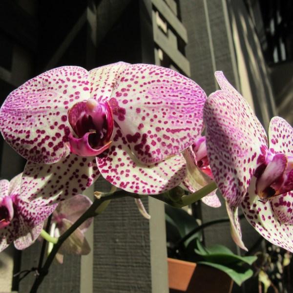 Botanical Garden orchid