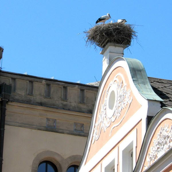 Storks nest