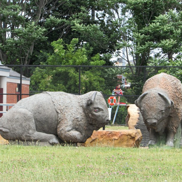 Buffalo Sculptures